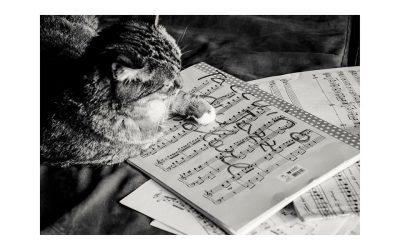 """Due album, due concerti: """"Taccuino di Jazz popolare"""" di Giovanni Palombo e """"Leonard Bernstein Tribute"""" di Gabriele Coen 5et"""